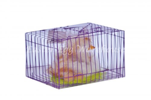 Soft Feathered Duck in Cage