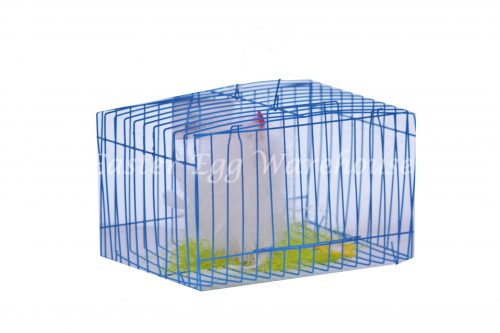 Soft Feathered Rooster in Cage